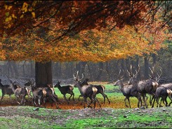 Golestan Safari -